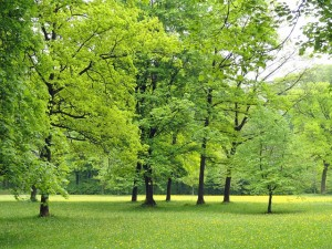 Does green space help recovery