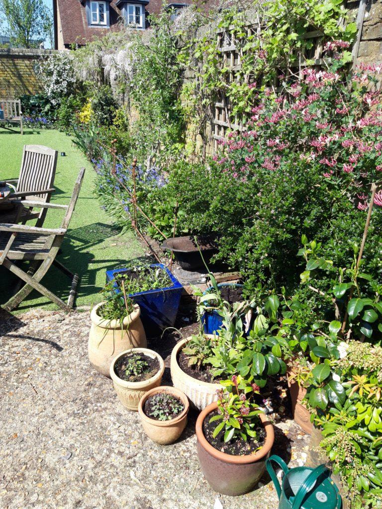 Enjoying our garden during the lock-down